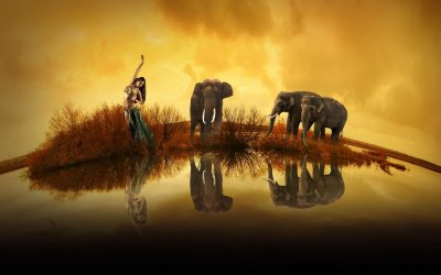 There is an Elephant on the Dance Floor! The Changing World of Bellydance